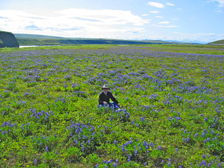 Jan in Lupines